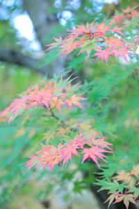 日本庭園の秋 - やきつべふぉと