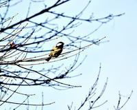 久々に嶺公園で鳥撮り - 星の小父さまフォトつづり