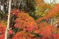 近くの公園で - 江州の忠太郎