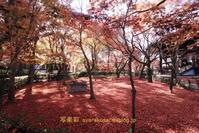真如堂に行く2020年12月 -2 - 写楽彩