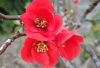 初冬~野の花アラカルト~ - 里山の四季