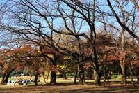 晩秋の光が丘公園 - お散歩写真     O-edo line