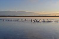 水鳥、増えた?~今週のウトナイ湖 - やぁやぁ。