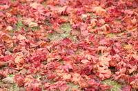 秋の終わり - 猪こっと猛進