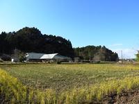 体を温める昆虫たち - 千葉県いすみ環境と文化のさとセンター