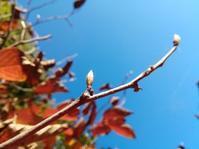 落ち葉掃き… - 侘助つれづれ