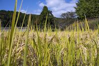 道草米 - 良え畝のブログ