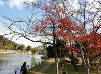 冬バージョンの東金・八鶴湖畔 - 東金、折々の風景