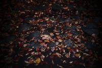 まだ秋が残っていたころ20201114 - Yoshi-A の写真の楽しみ