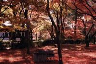 真如堂に行く2020年12月-7 - 写楽彩2