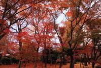 真如堂に行く2020年12月-11 - 写楽彩2