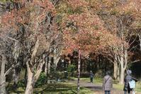 ラクウショウとメタセコイア@水元公園 - そらいろのパレット
