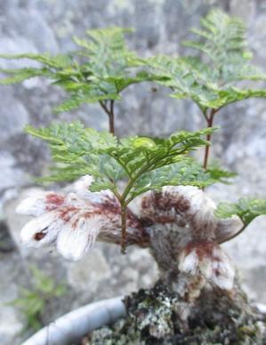 「ツボ」を求めて - めざすはBONSAI いまは鉢植え!