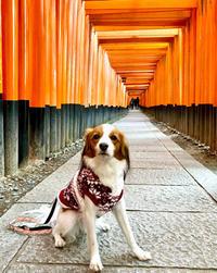 京都2日目は思い出の… - 続︎︎♡たんたんたん日記