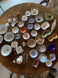 小皿豆皿色々&ヒヤシンス水栽培 - CROSSE 便り