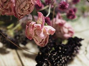 グリママの花日記