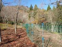 12/4(金)どんぐりプロジェクト~6年生~第7期生・植樹式 - くつきの森フォトレター