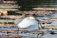 近場の3公園で探鳥(2020.11.29) - 週末バーダーのBirding記録