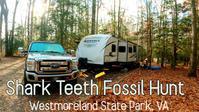 200万年前のサメの歯の化石を探しにキャンピングトレーラでキャンプ|モルモット4匹、犬2匹を連れて家族5人で感謝祭にキャンプに行って来ました - アメリカを自転車でエンジョイ