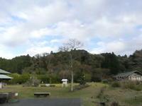 初冬の野鳥、植物の実 - 千葉県いすみ環境と文化のさとセンター