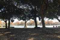 小合溜の水鳥たちなど@水元公園 - そらいろのパレット