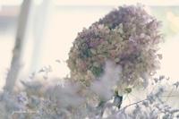 窓辺の花 - jumhina biyori*