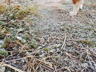 冬ですね(No.315) - 薪窯冬青 犬と山暮らし