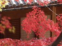 桐生市 崇禅寺の紅葉(2) (2020/11/22撮影) - toshiさんのお気楽ブログ