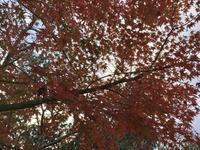 静かな紅葉の日々 - my gallery-2