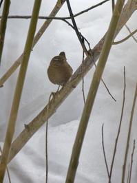 雪ミソ - 北国の顔ぶれ