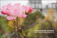 YOKOHAMA SONGS - すずちゃんのカメラ!かめら!camera!