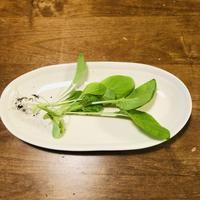 初収穫!母さんが作った小松菜は大丈夫か!? - ~ヒトが主役の暮らしを作る、ライフオーガナイザー~VIVA LIFE Lab.