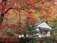 紅葉 27京都府 - ty4834 四季の写真Ⅱ