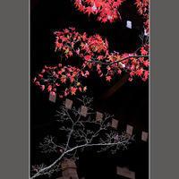 木立が違えば - HIGEMASA's Moody Photo