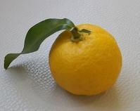 探索RUN(中平) - 柚の森の仲間たち