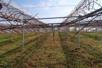草刈り三昧 - ~葡萄と田舎時間~ 西田葡萄園のブログ