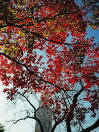 新宿御苑紅葉 - 風の香に誘われて 風景のふぉと缶