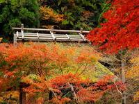 紅葉 28京都府 - ty4834 四季の写真Ⅱ