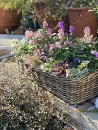 アネモネやストックの寄せ植え - 小さな庭 2