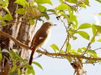 夕陽の中にいたジョウビタキ - コーヒー党の野鳥と自然パート3