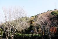 今日は定休日☆裏山がモノトーン - くらしのギャラリーちぐさ