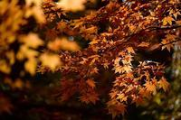 大沼公園⑥ - Photo Of 北海道大陸
