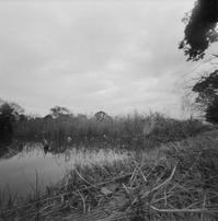 池のほとり - Ippo Ippo