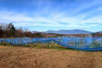第2圃場の草刈りで見つけたもの - ~葡萄と田舎時間~ 西田葡萄園のブログ