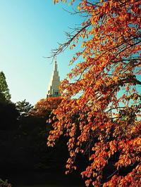 新宿御苑紅葉Ⅱ - 風の香に誘われて 風景のふぉと缶