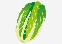 【悲報】白菜農家「今年の白菜は最高の出来でしたが利益でないから廃棄します」ポイポイ - フェミ速