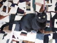 猫のお留守番 レオくん編。 - ゆきねこ猫家族