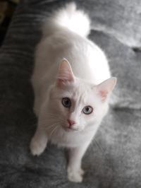 猫のお留守番 ルナちゃん編。 - ゆきねこ猫家族