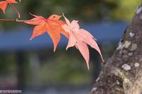 紅葉の旭山動物園~10月 - My favorite ~Diary 3~