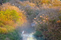 「早朝の川辺にて」 - ほぼ京都人の密やかな眺め Excite Blog版